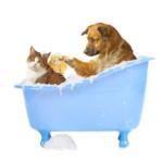 Купание собак и котов